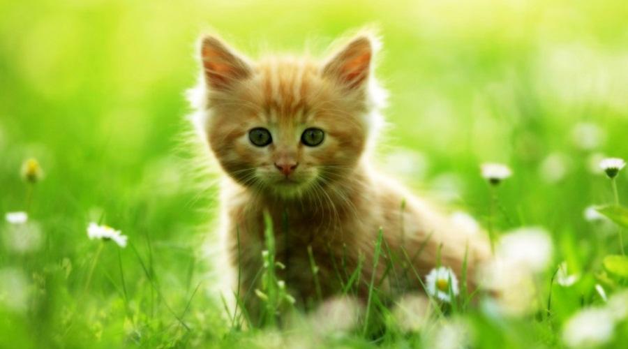 Глисты у кошек: симптомы
