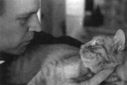 лечение кошек и собак