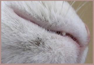 Почему кошка встряхивает головой