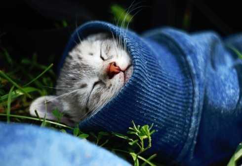Все о простуде у кошек