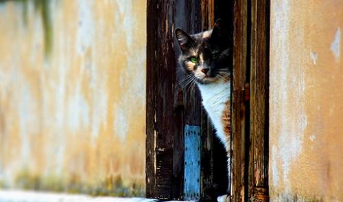 Симптомы и лечение кошачей