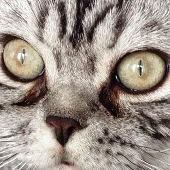 Болезни глаз у кошек.