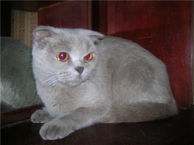 Почему у кота слезятся глаза и что делать
