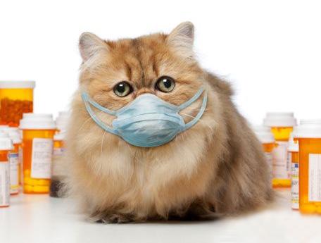 Как лечить котят от простуды в домашних условиях - ЗНАТНЫЙ ПЛОТНИК