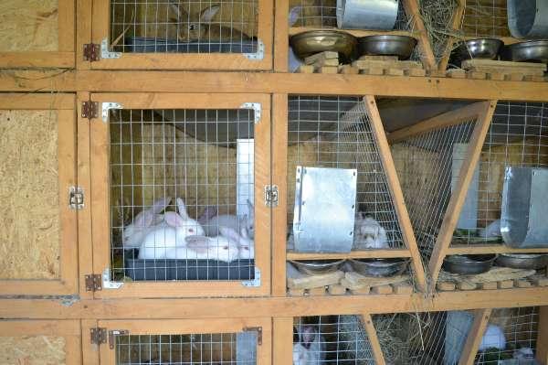 Сделать клетку для кролика своими руками фото